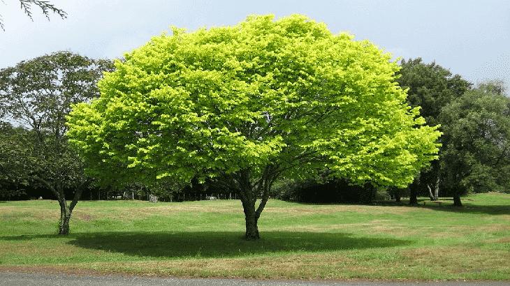 تفسير حلم رؤية شجرة في المنام