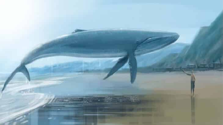 تفسير رؤية الحوت في الحلم معلومة ثقافية