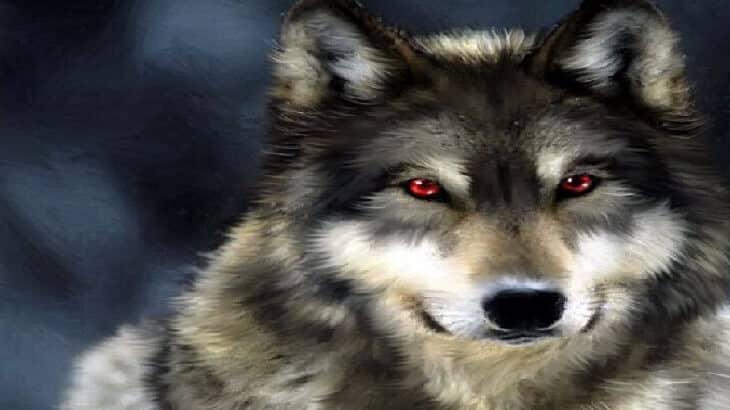 تفسير حلم الذئب إقرأ حلم عضة الذئب الذئاب تهاجم حلم الذئب للحامل