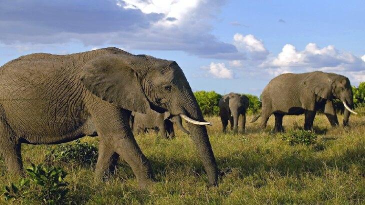 أكبر 10 كائنات حية علي الارض