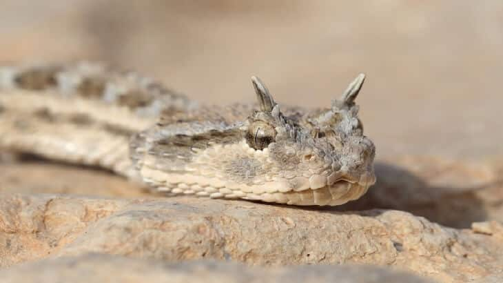 معلومات مدهشة عن الثعابين وأنواعها