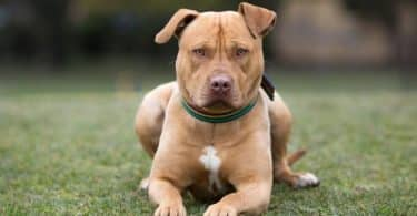 أشرس و أخطر 10 كلاب في العالم بالصور
