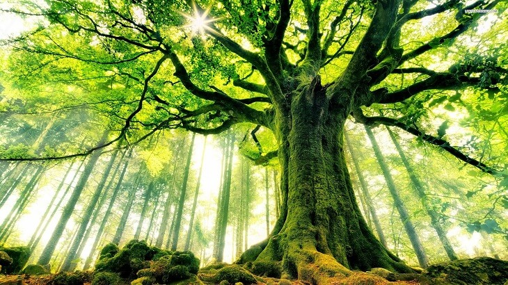 Image result for الشجرة التي تكون كثيرة الفروع