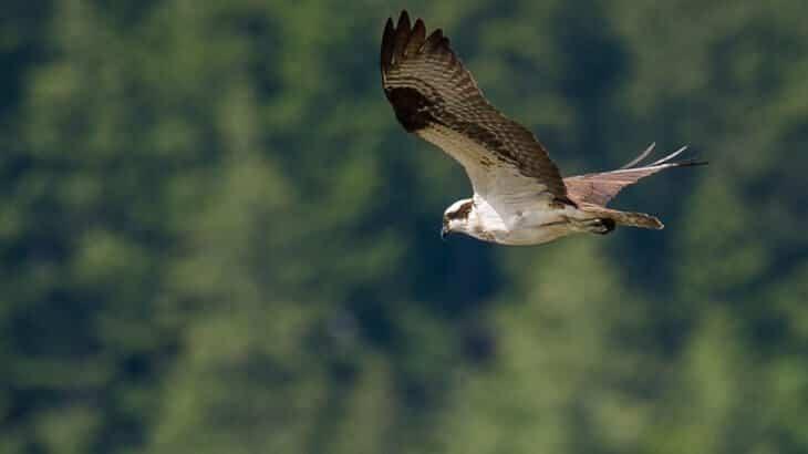 تفسير رؤية الطيور في الحلم ومعناه معلومة ثقافية