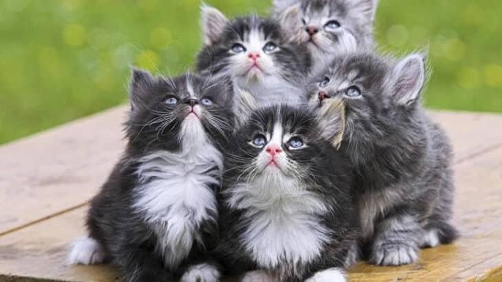 تفسير رؤية القطط في المنام ومعناه