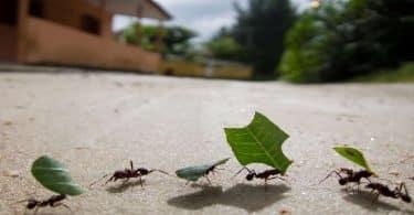 تفسير رؤية النمل في الحلم ومعناه