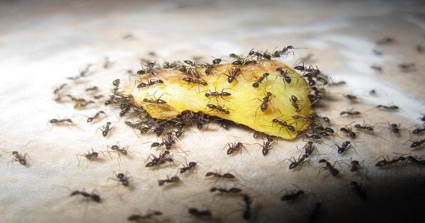 تفسير رؤية النمل في المنام ومعناه