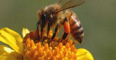 تفسير رؤية النحل في المنام ومعناه