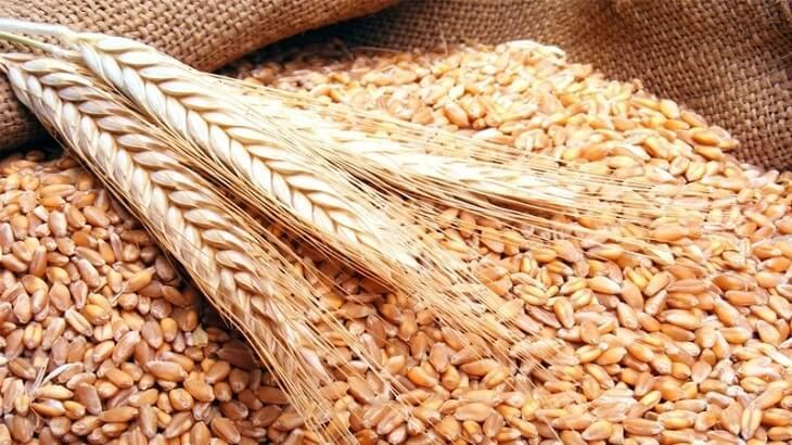 تفسير رؤية القمح في المنام ومعناه