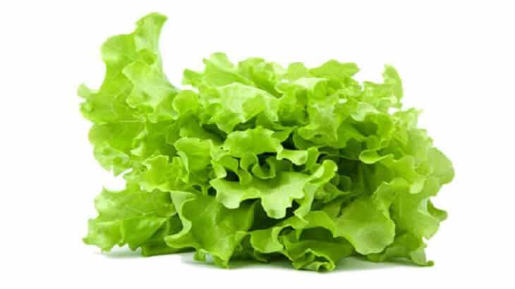 تفسير رؤية الخس في المنام اكل، شراء، تقطيع، زراعة