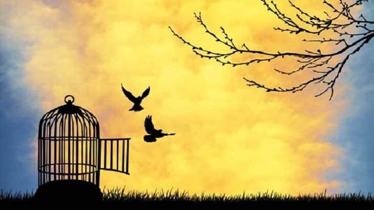 موضوع تعبير عن الحرية وضوابطها بالاستشهادات