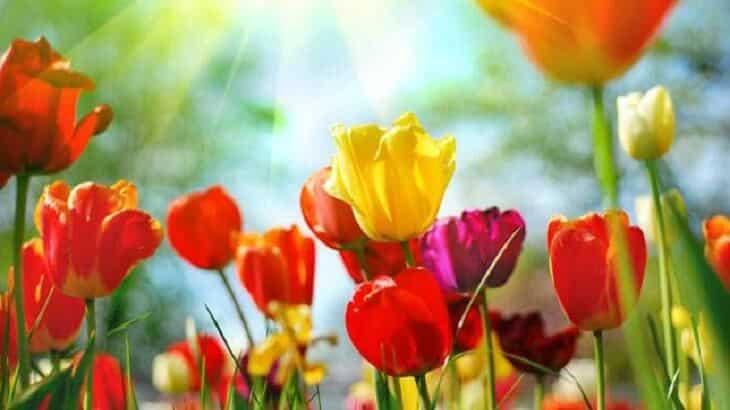 موضوع تعبير عن فصل الربيع بالعناصر والافكار