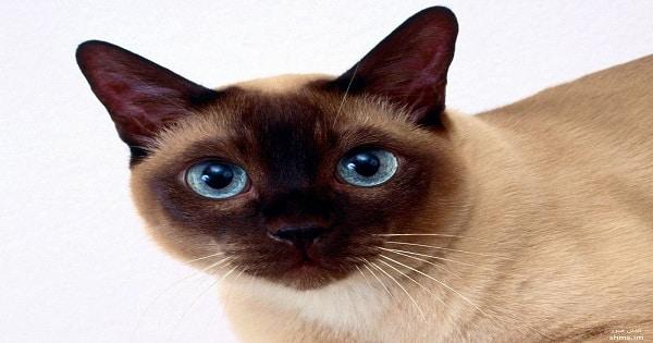 اسباب تساقط شعر القطط وكيفية علاجها