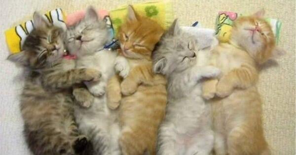 اعراض الحمل عند القطط بالاسبوع الاول