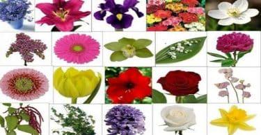 انواع الزهور بالصور والاسماء