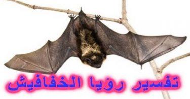 رؤية الخفاش في المنام