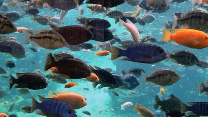 تفسير حلم صيد السمك باليد في المنام ومعناه بالتفصيل معلومة ثقافية
