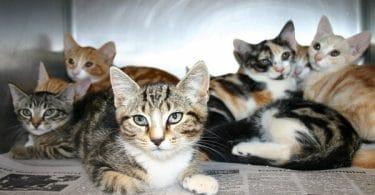 جميع أنواع القطط الأليفة و اسمائها بالتفصيل