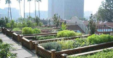 كيفية زراعة اسطح المنازل بالصور من البداية للنهاية