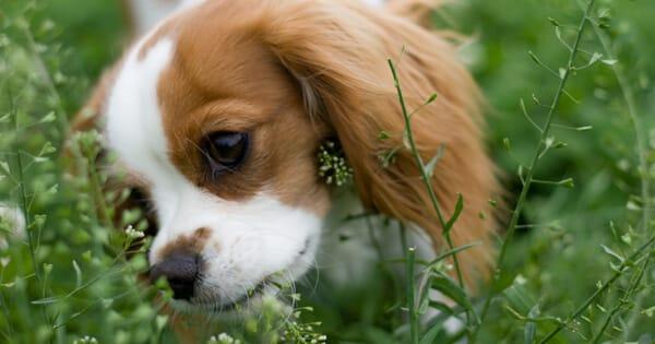 ماذا تأكل الكلاب الصغيرة، معلومات هامة عن التغذية