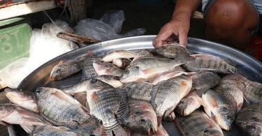 مشروع تربية الاسماك في الاحواض الجاهزه بالتفصيل