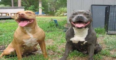 معلومات عن الكلاب تغذيتها وتدريبها وتكاثرها