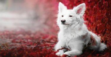 هل تربية الكلاب حلال ام حرام ؟