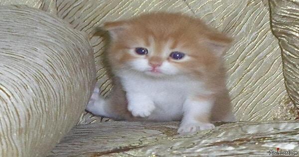 اضرار تربية القطط في البيت على البنات