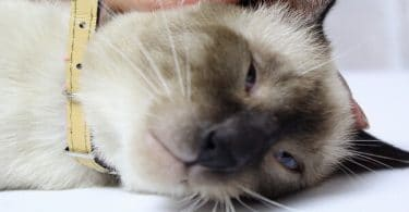 امراض القطط الصغيرة وطرق علاجها