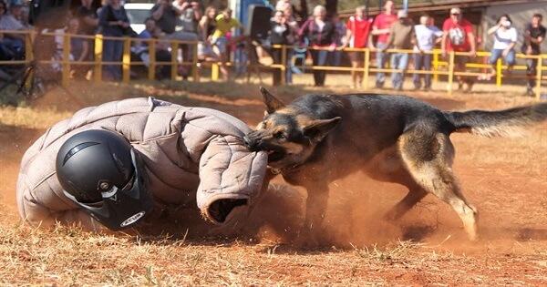 تدريب الكلاب على الهجوم بالأمر