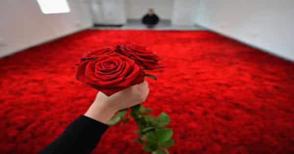 تفسير إهداء الورد في المنام لابن سيرين معلومة ثقافية