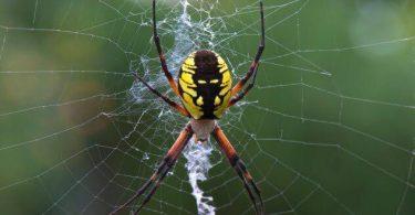 تفسير رؤية العنكبوت في المنام ومعناه