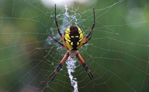 تفسير رؤية العنكبوت في المنام ومعناه معلومة ثقافية