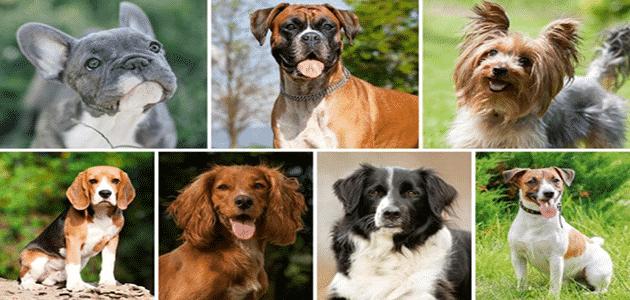 جميع انواع الكلاب واسمائهم