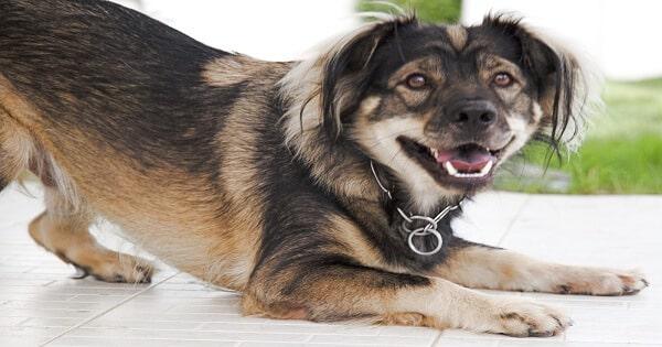 حكم تربية الكلاب في المنزل و مخالطته للإنسان