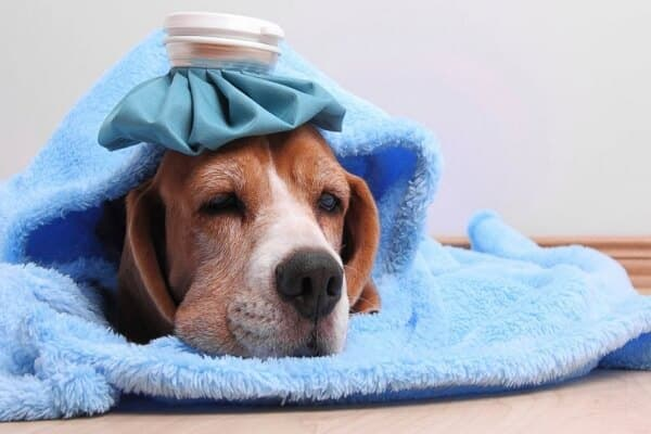 علاج فقدان الشهية عند الكلاب وأسبابه