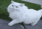 ماذا تأكل القطط من طعام البيت + وصفات خاصة