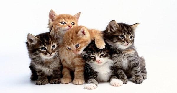 مدة حمل القطط وولادتها بالتفصيل