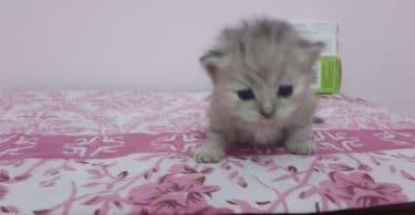 معلومات عن طعام القطط المنزلية الصغيرة بالتفصيل