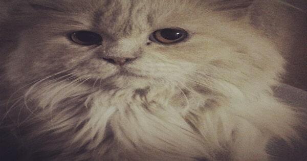هل يمكن علاج داء أو مرض القطط اثناء الحمل؟