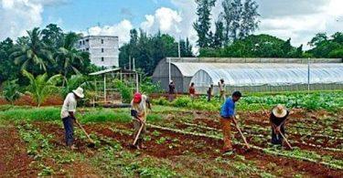 أدوات الزراعة وأسمائها مع الصور