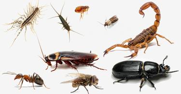 تفسير رؤية الحشرات في المنام