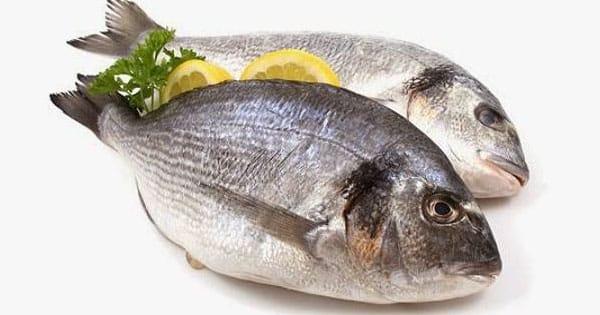 معنى السمك النيء في المنام لابن سيرين معلومة ثقافية