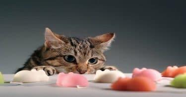أسرع علاج للتسمم القطط بالمنزل