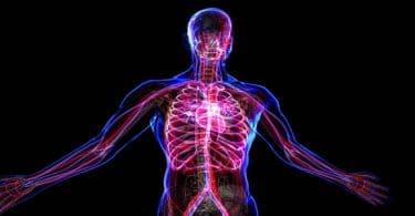 بحث عن الجهاز الدوري في الإنسان مكوناته ووظائفه
