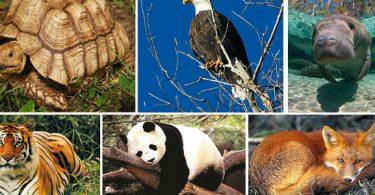 الحيوانات المنقرضة والمهددة بالانقراض