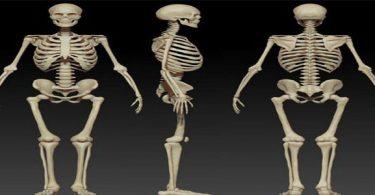 بحث عن وظائف الهيكل العظم
