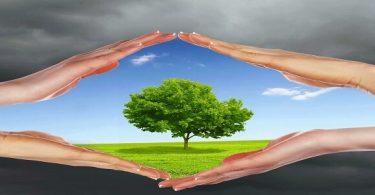 بعض الحلول المقترحة للحفاظ على البيئة خالية من التلوث