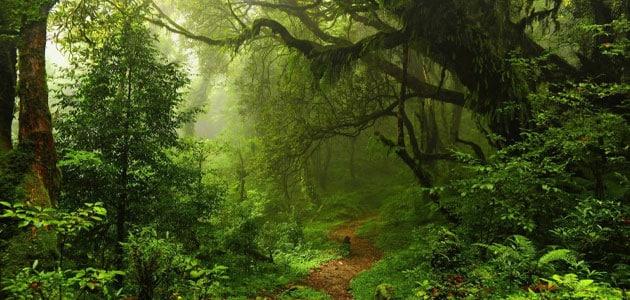 تفسير رؤية الغابة في المنام