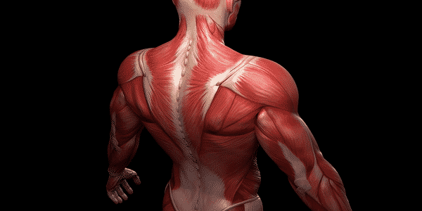 Information about the body muscles and their names